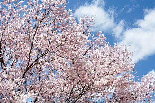 桜を見る会参加者招待者芸能人一覧!何が問題点なのか解説!